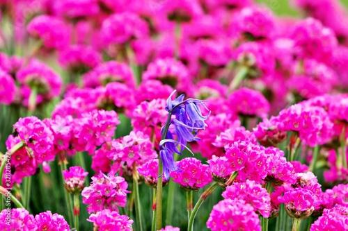Leuchtende Blumenwiese