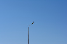 Seagull On A Lamppost Against ...