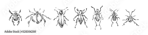 Tela Hand drawn beetles collection