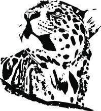 Hand Drawn Jaguar. Vector Iso...