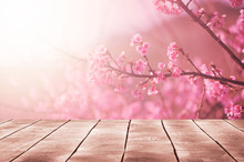 Spring Seasonal Of Pink Sakura...