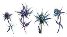Blue Thistle Plant Watercolor ...
