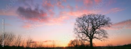 Photo Eiche ohne Blätter im Winter bei Sonnenuntergang