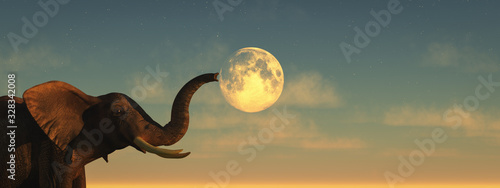 elephant and sunset Canvas Print