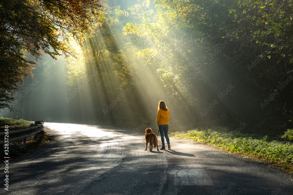 Fototapeta women with a dog together. sun light on the road. girl and a red toller retriever on a walk.