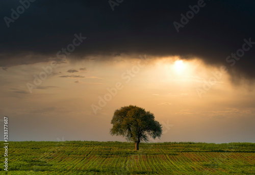 Fotografie, Obraz lonely tree in a field under a stormy sky