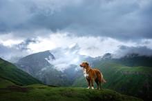 Mountain Landscape With A Dog. A Trip To Georgia. Pet On A Background Of Beautiful Nature. Nova Scotia Retriever On A Trip