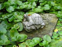 Turtle Sculpture In The Garden...