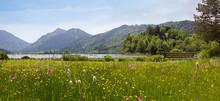 Wildflower Meadow At Spa Garde...