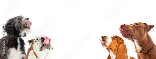 Foto Hungry Dogs Salivating on Horizontal Web Banner