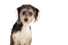 Shaggy Tri-Color Cute Dog Clos...