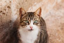 Portrait Of A Cat In Essaouira, Morocco