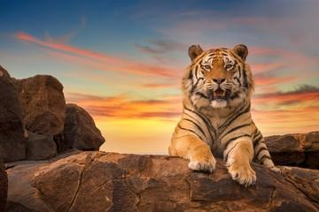 Usamljeni odrasli bengalski tigar (Panthera tigris) koji gleda u kameru s vrha stjenovitog brda, s prekrasnim nebom zalaska sunca u pozadini.