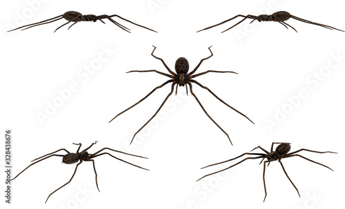 Tegenaria gigantea giant spider on white  background multiple angle combined pos Canvas Print