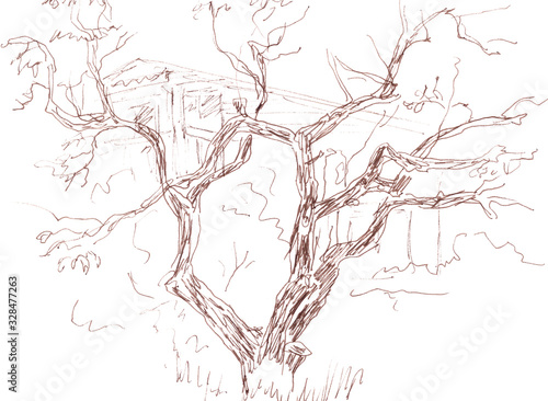 Vászonkép graphic drawing of an old branchy tree
