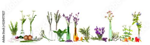Obraz Verschiedene Küchenkräuter freigestellt vor weißem Hintergrund, Panorama-Poster - fototapety do salonu