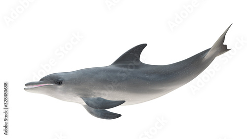 Fotografia, Obraz Isolated bottlenose dolphin tail up side profile view on white background cutout