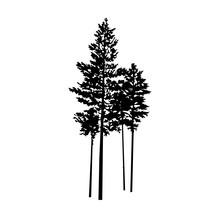Silhouette Of Few Pine Trees. ...