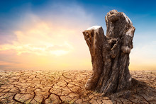 Tree Stump On Arid Ground With Sunset Background, Natural Reserve And Climate Change Concept