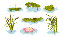 Water And Swamp Plants With Wa...