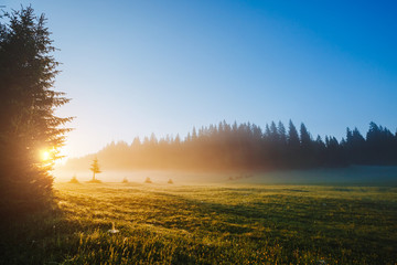Fantastic misty pasture in the sunlight. Locations place Durmitor National park, Montenegro.