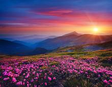 Charming Pink Flower Rhododend...