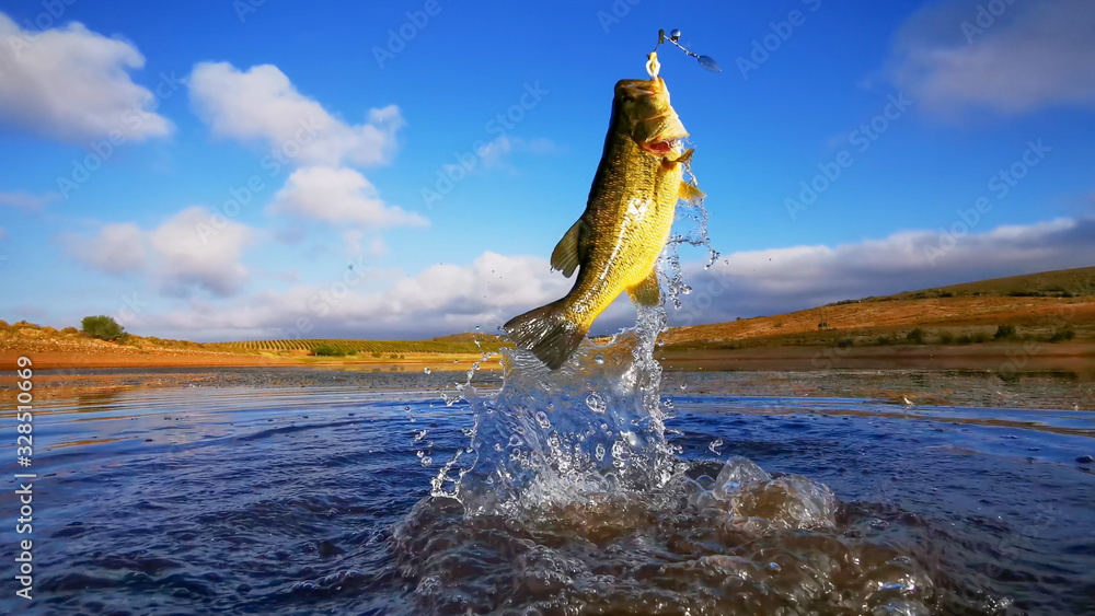 Fototapeta Big Bass Large mouth - Fishing