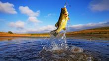 Big Bass Large Mouth - Fishing