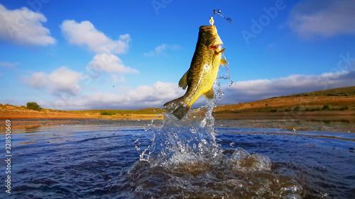 Fotografia Big Bass Large mouth - Fishing