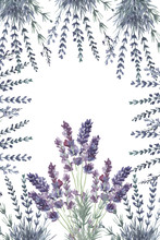 Lavender Provence Watercolor Pattern Print Textile Aromatherapy Herbs Spring Flowers Blooming On A White Background Frame Logo Postcard