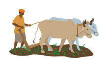 Vector Illustration Of Indian Farmer In Turban With Pair Of Oxen Plowing Field. Traditional Agriculture. Flat Style.