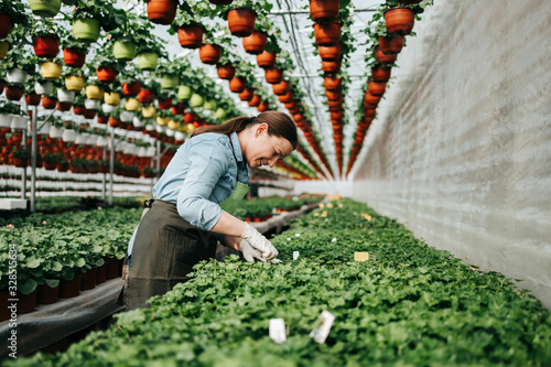 Photographie Happy and positive young adult woman working in greenhouse and enjoying in beautiful flowers