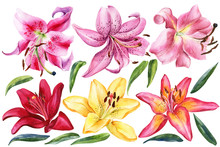 Elegant Lilies, Red Yellow Orange Pink Lily Flowers On An Isolated White Background, Watercolor Illustration, Collection, Set Of Watercolor Flower.