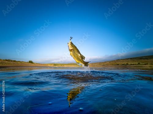 Fototapeta Bass Fishing on lake obraz