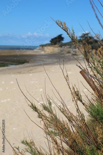 Cuadros en Lienzo Jolie plage de sable fin a maree basse a Sainte-Marie de Re, Ile de Re