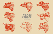 Cows Set In Vintage Style. Ca...