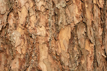 Brown Tree Bark In Close-up, B...
