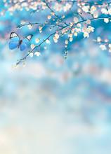 Cherry Blossoms Over Blue Natu...