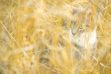 Cute Kitten Walk In The Dry Go...
