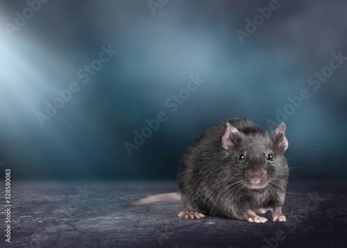 fototapeta na lodówkę Rat.