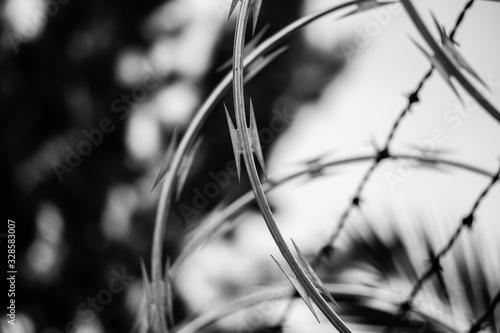 ALAMBRE DE PUAS (barbed wire) Canvas Print