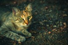 Grey Fluffy Cat With Green Eye...