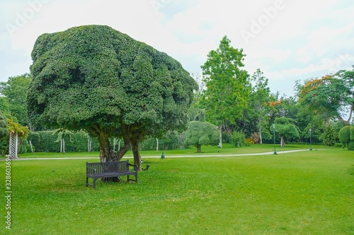 Fényképezés Lonely branchy tree surrounded by beautiful topiary bushes on green grass lawn in public urban park on blurred trees background