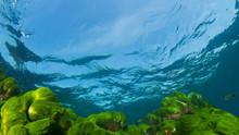 Blue Ocean, Sunlight And Green Algae On Reef