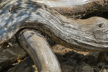 Powerful Thick Roots And Branc...