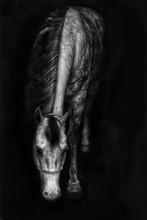 Beautiful Grey Dapple Horse Wi...