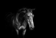 Beautiful Horse Portrait With ...