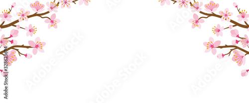 Obraz Frame of cherry blossom twigs - fototapety do salonu