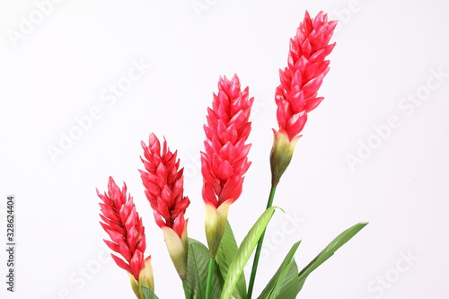 Photo Fake Red cone ginger flower on white background