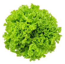 Lettuce Isolated On White Clip...